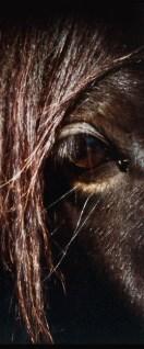 Parte del rostro de un caballo