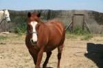 Curso de Fisioterapia para caballos