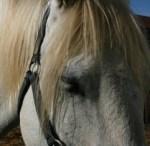 Cursillo de Introducción a la psicoterapia asistida, coaching con caballos y manejo natural