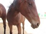 La Universidad de Vic pone en marcha la 8 ª edición de su Postgrado en Equitación Terapéutica