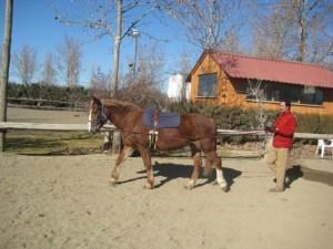 Colocado el caballo en paso