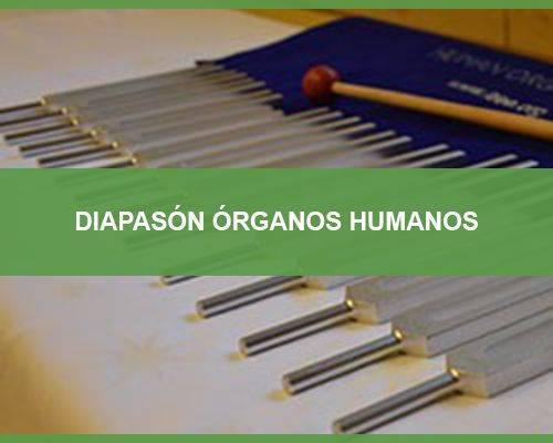 diapason-organos-humanos