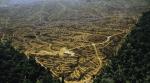 Penyebab Banjir Bandang Kalimantan Selatan Lantaran Hutan Sebagian Besar Sudah Menjadi Perkebunan Kelapa Sawit