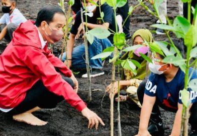 Presiden: Rehabilitasi Mangrove Akan Terus Kita Lakukan