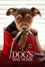 Nonton Film A Dog's Way Home (2019) Subtitle Indonesia Streaming Movie Download