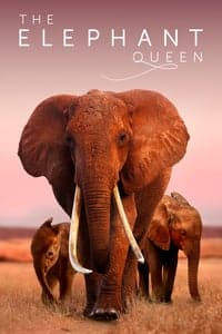 Nonton Film The Elephant Queen (2019) Subtitle Indonesia Streaming Movie Download