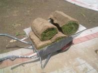 transport trawnika w rolkach na miejsce docelowe