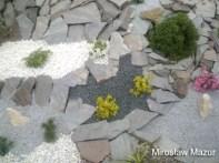 ogród skalny z roślinami