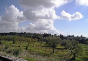 049 - Valle dei Templi Agrigento
