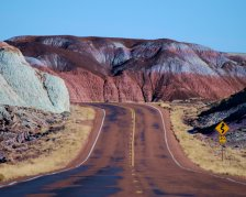 Petrified Forest 2014
