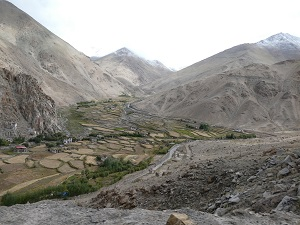 Harvested fields Ladakh