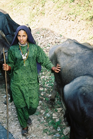 Hill tribe water buffulo herd girl in the Himalayas India 2003