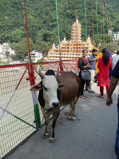 Shoba on the Lakshman Jhula bridge, Rishikesh