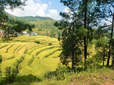 Rice fields and mountain villages from the forest road near Gwaldam, Himalayan India
