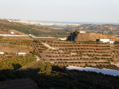 Established and new Mango plantations, Velez Malag and the Mediteranean beyond from Casa Trinadad