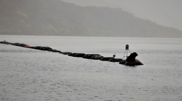 A seal sits on the buoy of a mussel farm