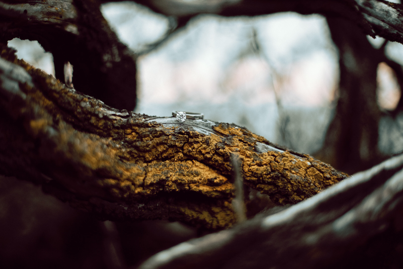A diamond wedding ring resting on branch with yellow algea