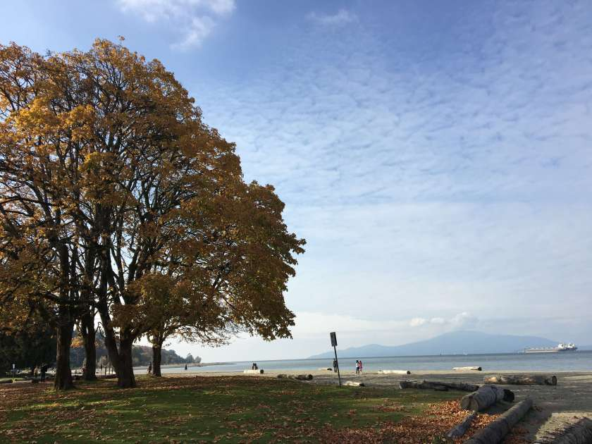 A tree with autumn foliage next to a beach.