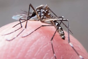 Saúde intensifica campanha contra o mosquito da dengue, chikungunya e zika em Teresópolis