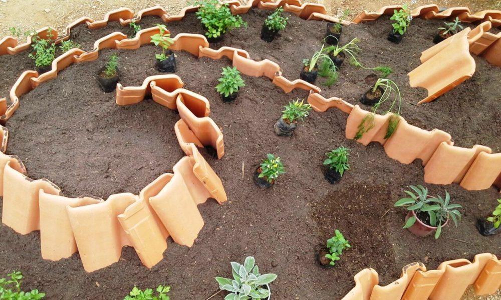 Construção de espiral de plantas no Fischer