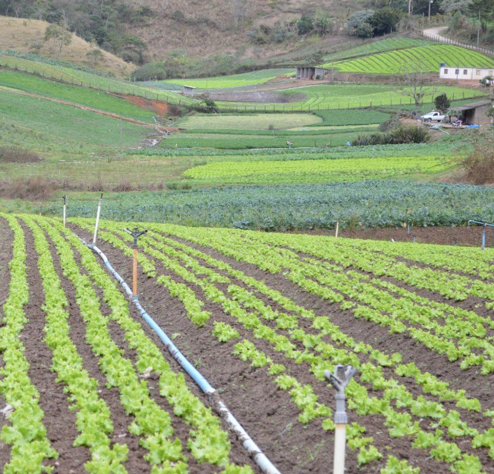 Uso de Equipamento de Proteção Individual passa a ser obrigatório para aplicação de agrotóxico