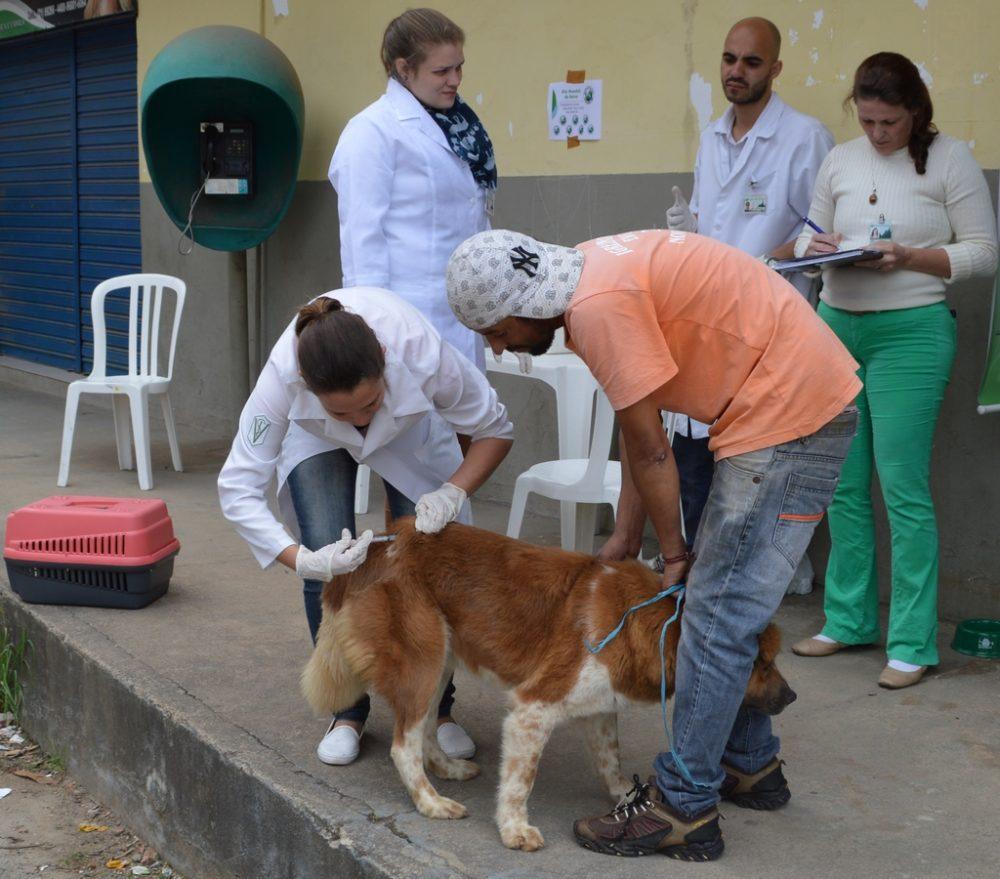 Vacinação antirrábica acontece nos PSFs da Quinta Lebrão e Fonte Santa
