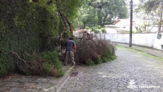 Rua Samuel Vieira, no Caxanga, corte de tronco caído com chuvas e ventos fortes , parques e jardins efetuou o corte e liberação da via de trânsito.