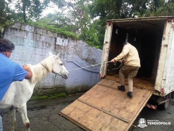Égua resgatada na Granja Guarani é enviada para sítio no Imbiú e dono é notificado por maus-tratos