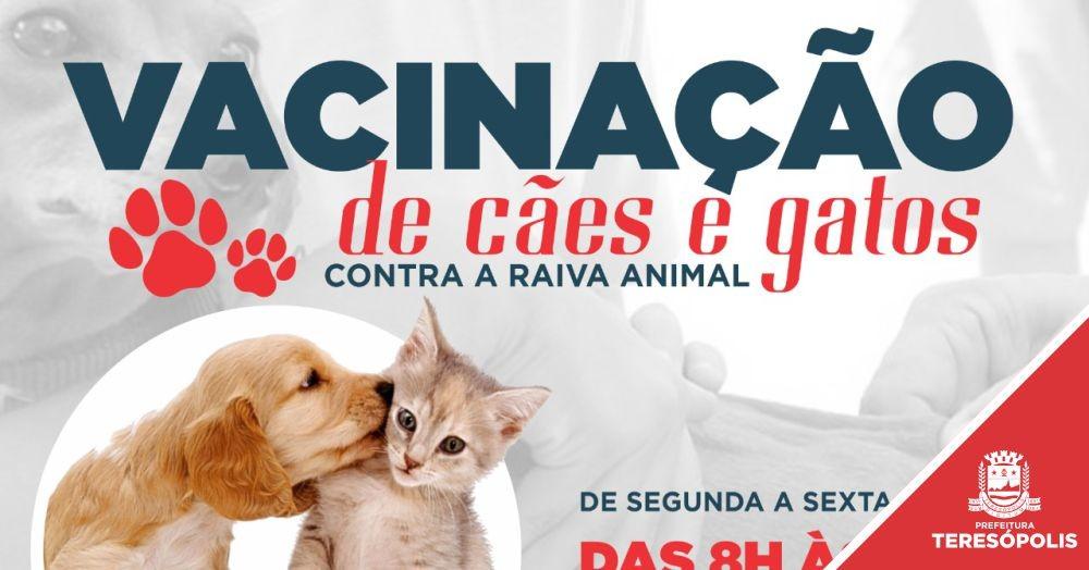Secretaria de Saúde vacina 1.400 cães e gatos contra raiva em ação na Praça Olímpica
