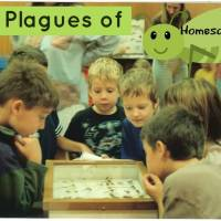 The Plagues of Homeschool