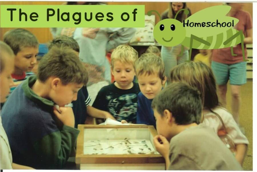 the author's son, with other children, looking at a display of insects with title The Plagues of Homeschool