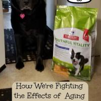 How We're Fighting the Effects of Aging In Our Senior Dog #AwesomeAsEver