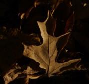 Őszi természetfotók - Bükkalja 3.