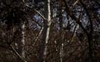 Őszi természetfotók - Medves-fennsík 2.