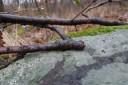 Makro - szikla, zuzmó, faág