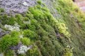 Makró fotó: moha, szikla, erdő
