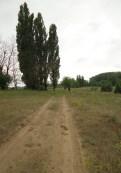Alföldi út nyárfákkal