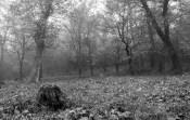 Kerecsendi-erdo-termeszetvedelmi-terulet-30