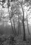 Kerecsendi-erdo-termeszetvedelmi-terulet-4