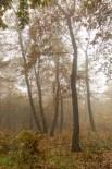 Kerecsendi-erdo-termeszetvedelmi-terulet-5