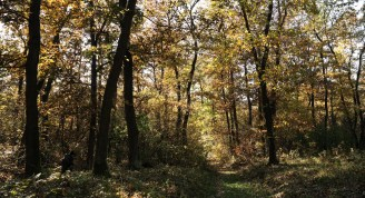 Berek, napfürdőző fák