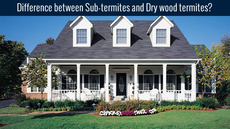 Drywood or Subterranean Termites – What's the Difference?