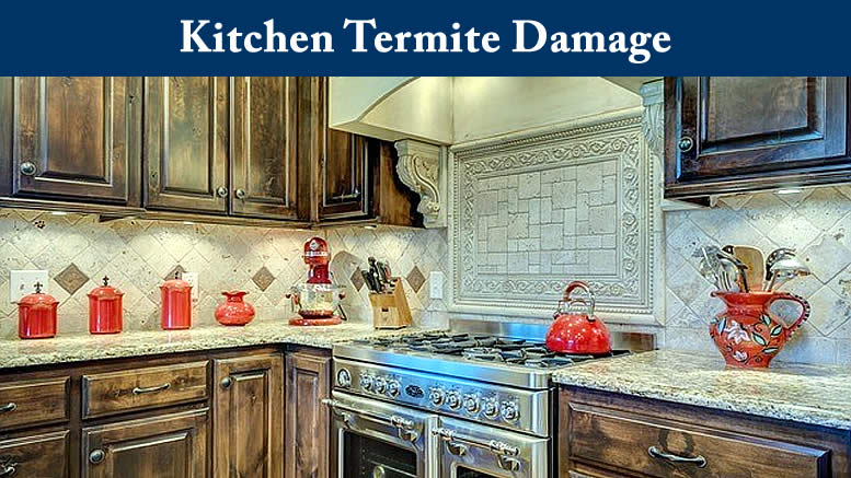 Kitchen Termite Damage - Termites in my Kitchen Cabinets