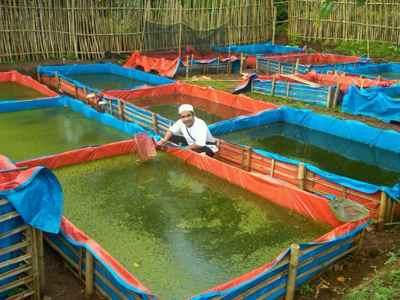 Kolam Terpal untuk Lele