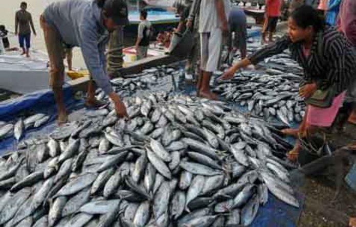Eksportir Ikan Segar