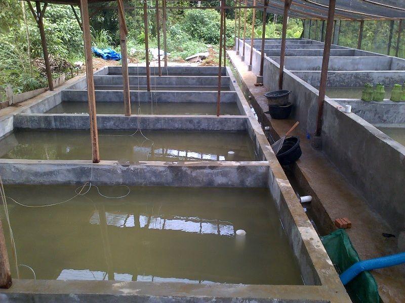 Pengaturan air kolam