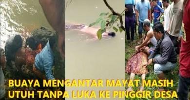 Rekaman Video Buaya Antar Mayat ke Pinggir Sungai Gegerkan Warga