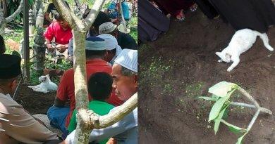 Netizen Terharu Lihat Aksi Kucing Tunggui Kuburan