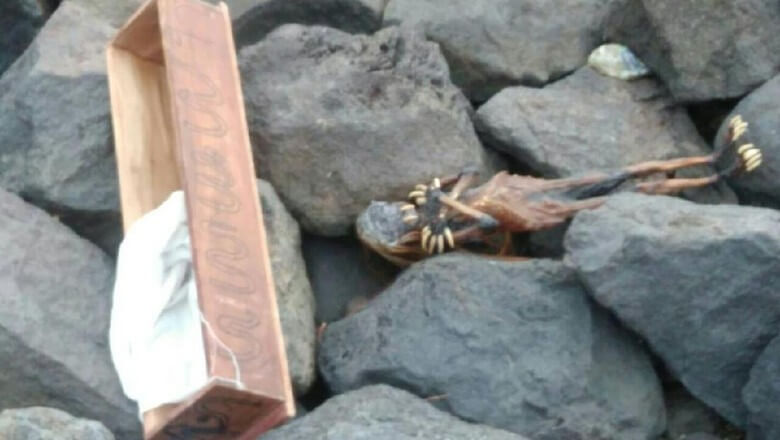 Surabaya Dihebohkan oleh Penemuan Jenglot di Pantai Watu-watu