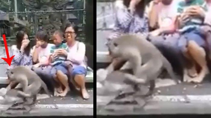 Video Merekam Bagaimana Foto keluarga ini Dirusak oleh Para Monyet.
